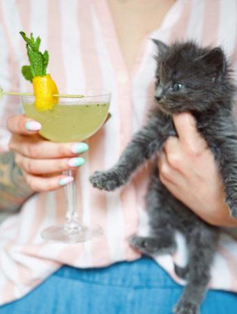 A Spring Classic: Sensation Cocktail